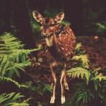 Oh Bambi