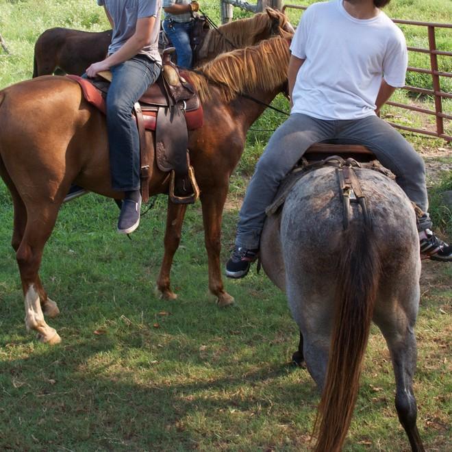 Riding Horses… Backwards!