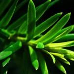 evergreen content