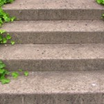 Steps & Ivy_0880