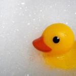 025: Go Ducks!