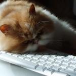 Kuba sleeping on keyboard