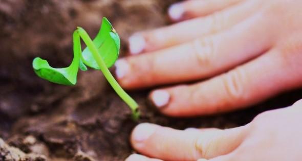 Choosing Profitability Over Growth