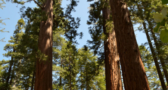 Defining Market Segments: Don't Lose the Forest for the Trees