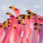 flamingos_partying