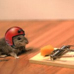 mouse trap helmet