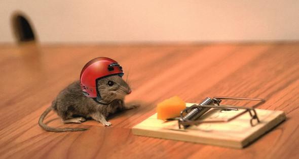 mouse trap helmet