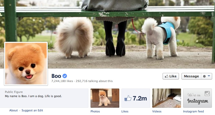 The Popularity of Boo the Dog's Facebook Page Is an Example of the Power of Customer Misuse